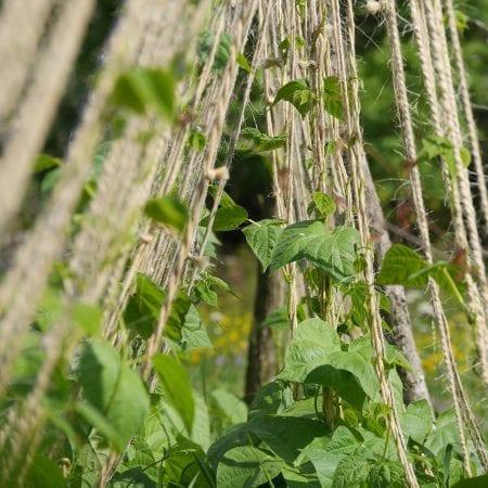 Garden String & Twines
