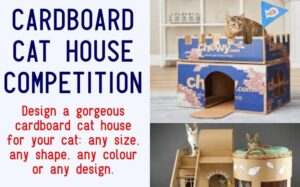 Cardboard Cat House Competition